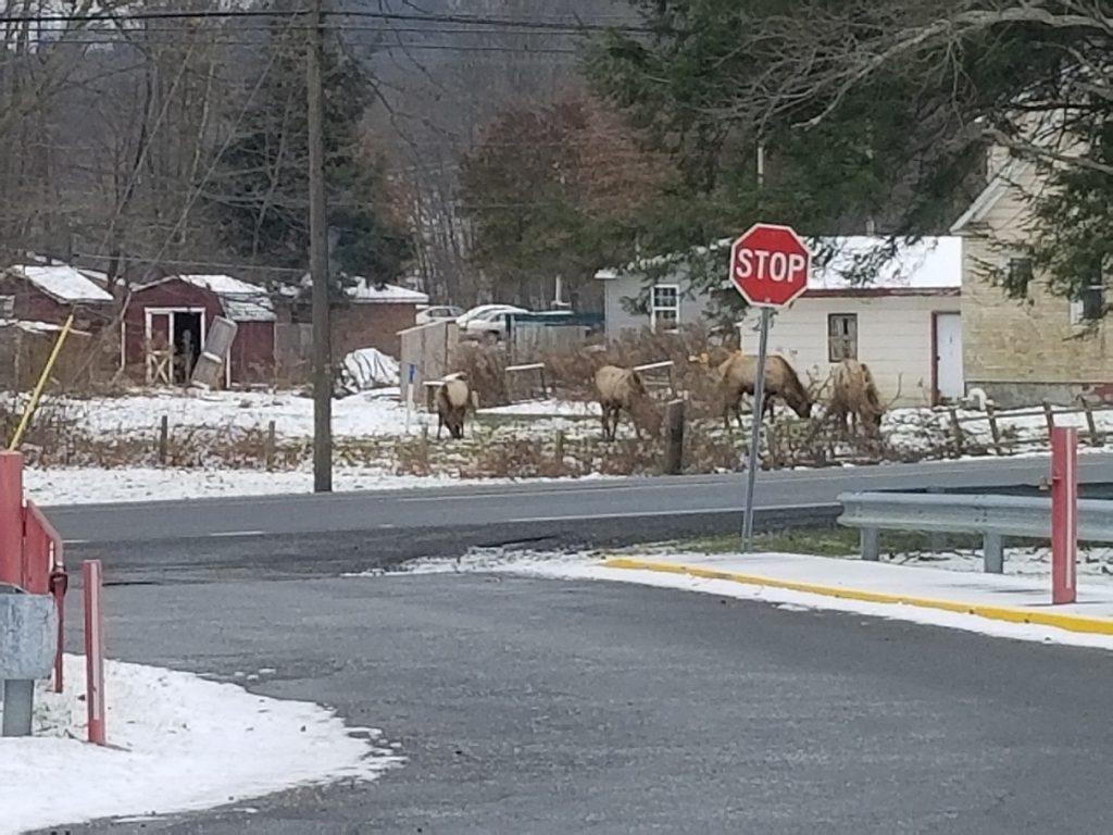 Elk visit Bennetts Valley Elementary - photo provided