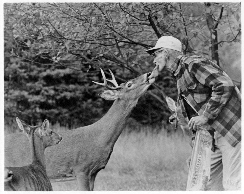 Slim Croyle, deer whisperer, courtesy of The Potter County Historical Society, Coudersport