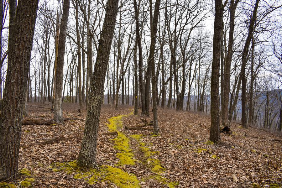 Fred Woods Trail by Samantha Cunningham