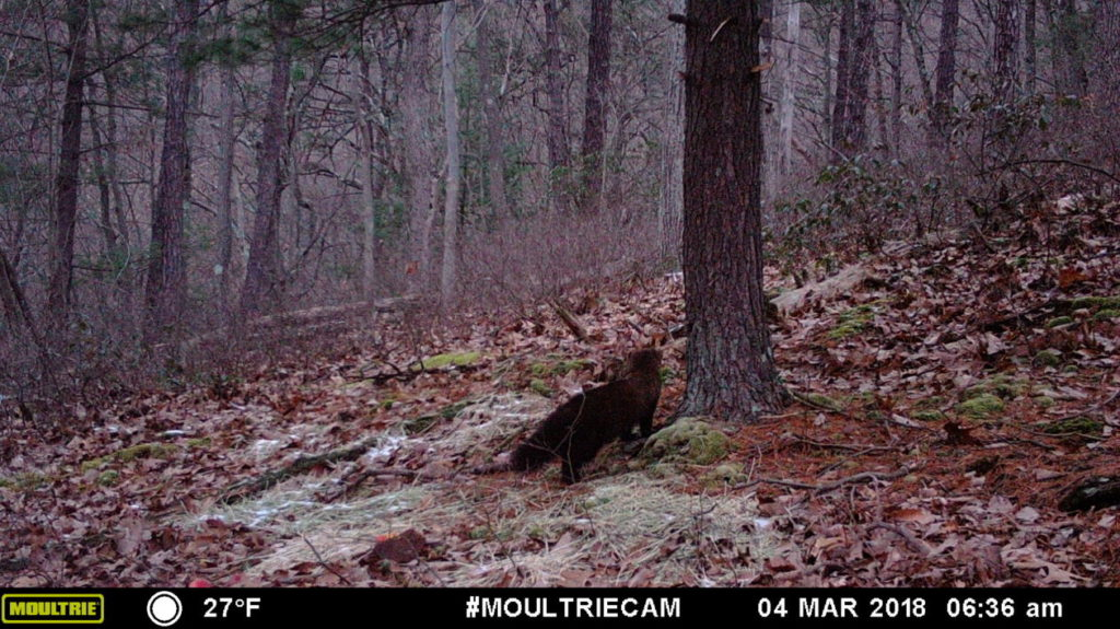 Game camera captures - fisher