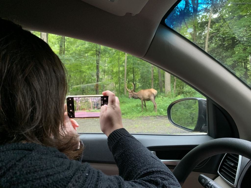 Experiencing the PA Wilds - Elk Country
