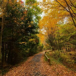 West Creek Rail Trail PA Wilds